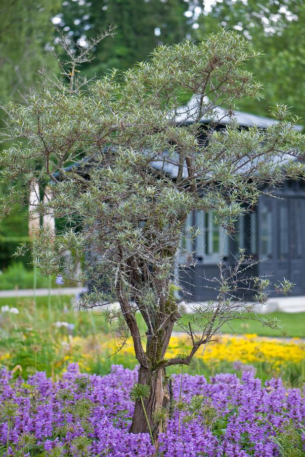 Der Gärtnerpavillon