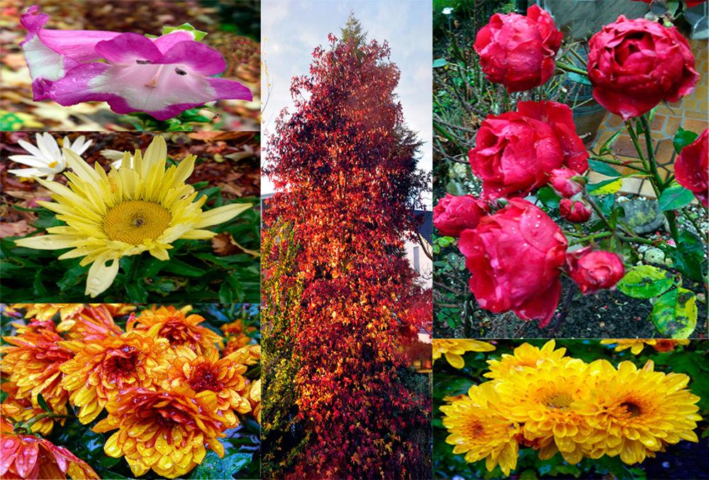 Der Garten am 8. 11. 2010