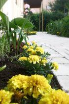 Der Garten blüht