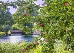 Der Garten des Fallada Haus. Apfelbaum mit Blick auf den See ...