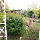Der Garten-Hund