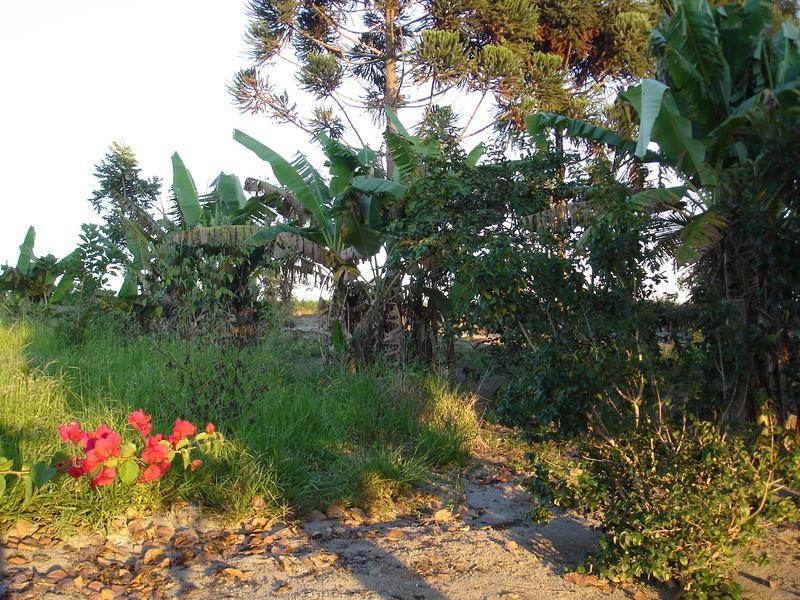 Der Garten in Brasilien