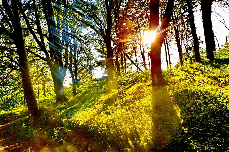 Der gefährdete Wald  auf Rügen...
