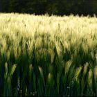 >>der geist umfasst die natur, wie der liebende seine geliebte...