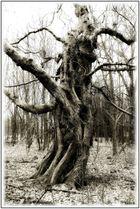 Der Geisterbaum #2
