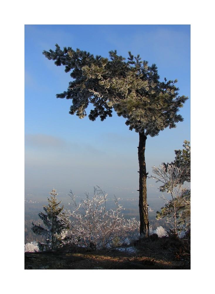 Der Gekrümmte Baum