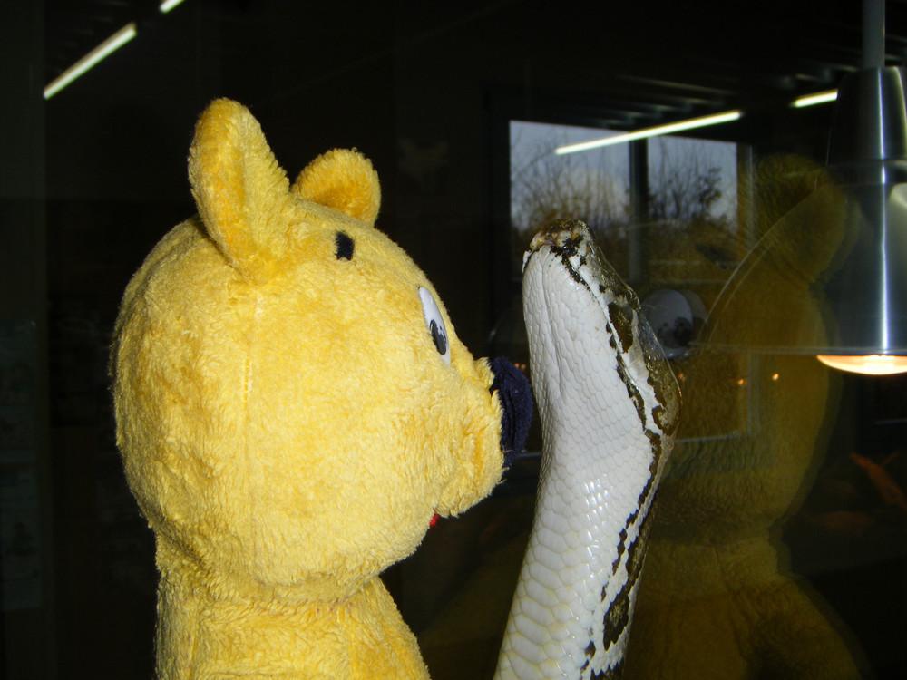 Der gelbe Bär als Schlangenflüsterer