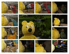 Der gelbe Bär als Vogelflüsterer