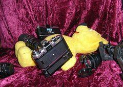 Der gelbe Bär auf Analog-Foto-Tour (2)