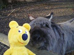 Der gelbe Bär auf dem Bauernhof (1)