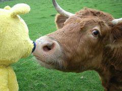 Der gelbe Bär auf der Weide