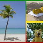 Der gelbe Bär auf Jamaika - Sonne und Strand