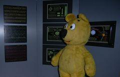 Der gelbe Bär auf neuer YBSA-Mission