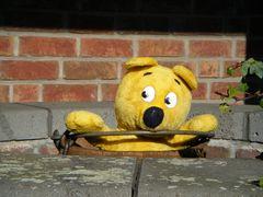 Der gelbe Bär bei der Brunnen-Inspektion