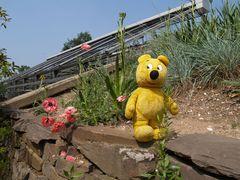 Der gelbe Bär beim Botanisieren