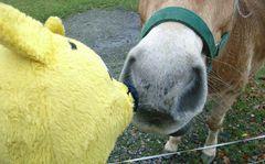 Der gelbe Bär beim Extreme-Haflinger-Nosing