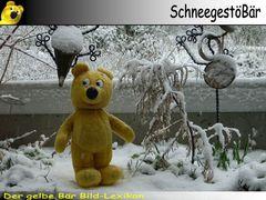Der gelbe Bär Bild-Lexikon - SchneegestöBär