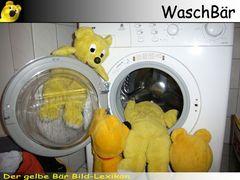 Der gelbe Bär Bild Lexikon - WaschBär