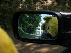 Der gelbe Bär empfiehlt - öfters mal nach Hinten schauen