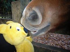 Der gelbe Bär entzieht sich dem Gefressen werden