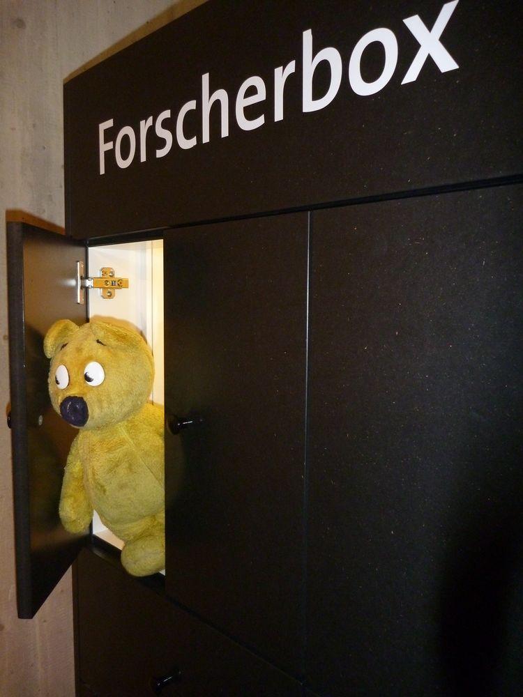 Der gelbe Bär forscht....