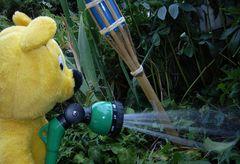 Der gelbe Bär hilft... Pflanzen kühlen