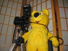 Der gelbe Bär hilft...beim Fotografieren (2)