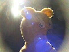 Der gelbe Bär - Illuminated