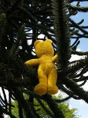Der gelbe Bär im Baum