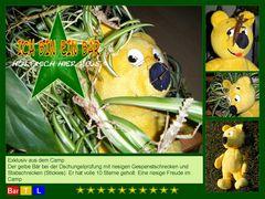 Der gelbe Bär im Dschungelcamp