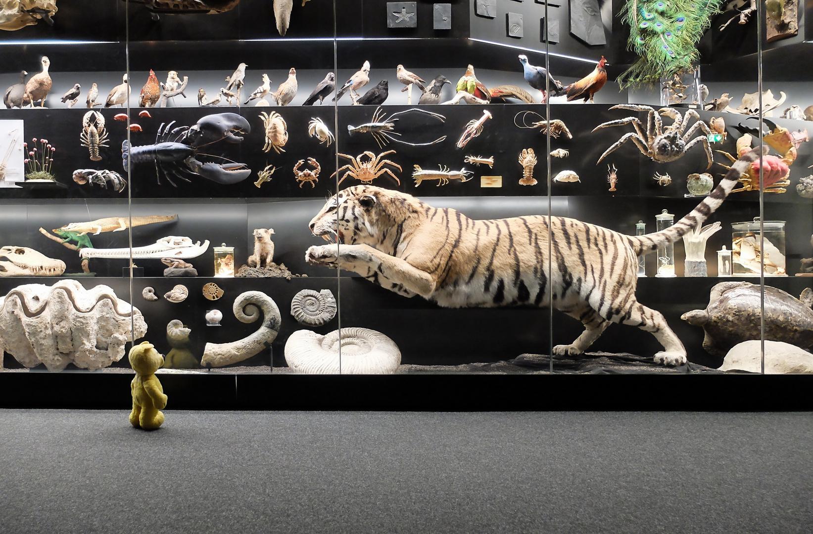 Der gelbe Bär im Naturkundemuseum