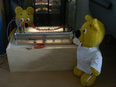 Der gelbe Bär im Reaktor-Labor