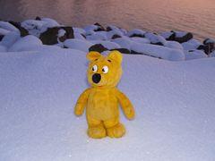 Der gelbe Bär im Schnee bei Sonnenuntergang