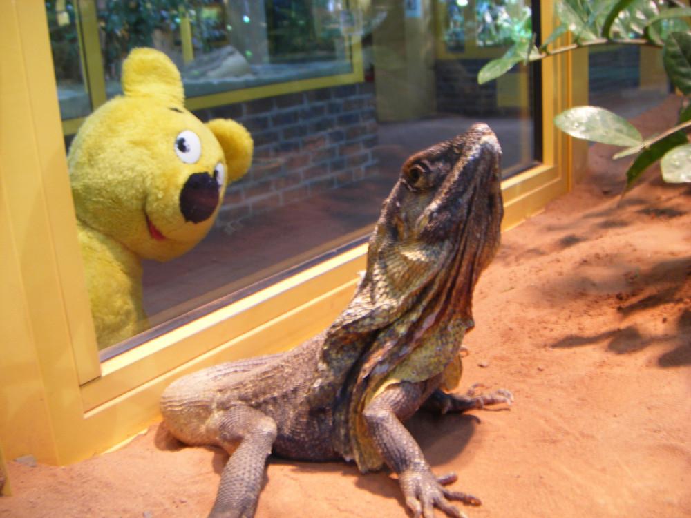 Der gelbe Bär im TerraZoo