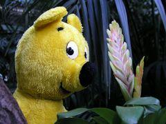 Der gelbe Bär im Tropenhaus