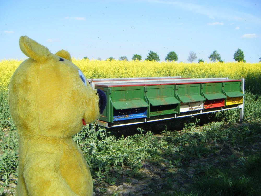 Der gelbe Bär in der Raps-Honig-Fabrik