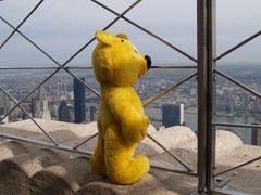 Der gelbe Bär in New York - Empire State Building