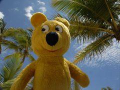 Der gelbe Bär ist zurück aus dem Urlaub