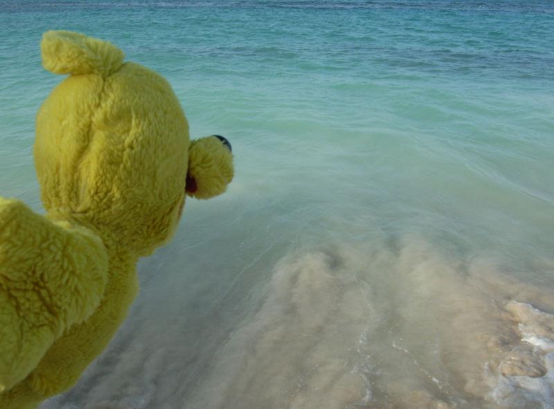Der gelbe Bär - JUMP !