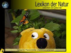 Der gelbe Bär Naturlexikon - Getigerter Passionsfalter