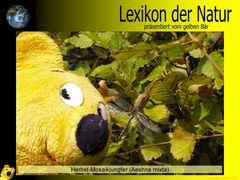 Der gelbe Bär Naturlexikon - Herbst Mosaikjungfer