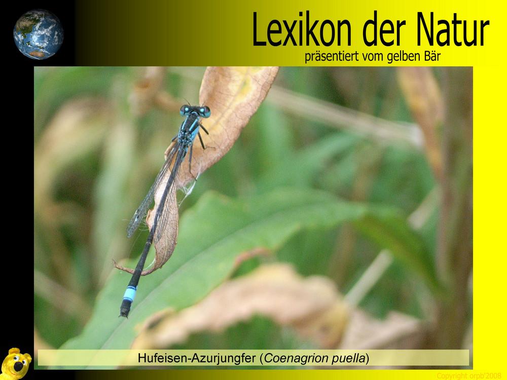 Der gelbe Bär Naturlexikon - Hufeisen Azurjungfer