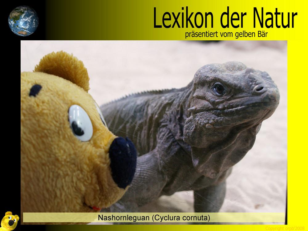 Der gelbe Bär Naturlexikon - Nashornleguan