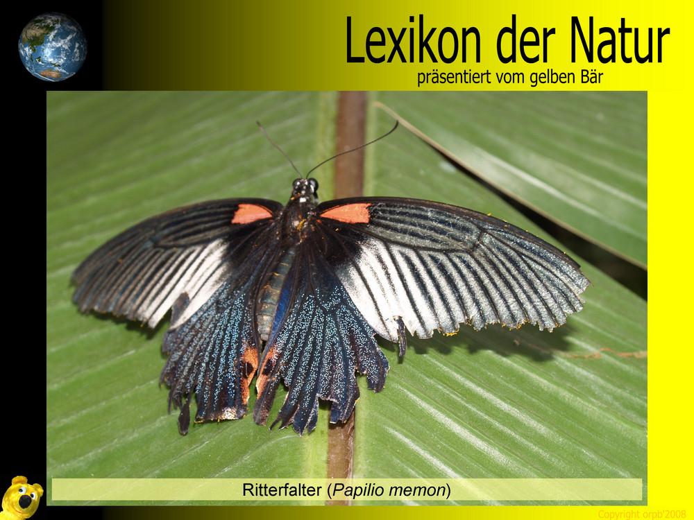 Der gelbe Bär Naturlexikon - Ritterfalter