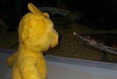 """Der gelbe Bär sagt  """"Es muss nicht immer Kaviar sein"""""""