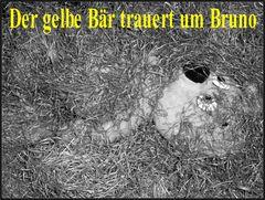 Der gelbe Bär trauert um Bruno