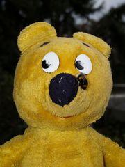 """Der gelbe Bär und die Hummel sagen: """"Der Frühling kommt bald"""""""