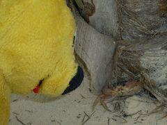 Der gelbe Bär und die Strandkrabbe