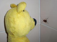Der gelbe Bär und La Cucaracha