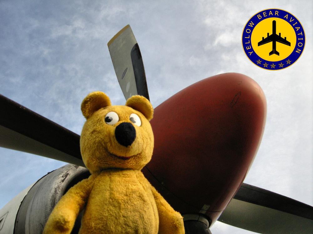 Der gelbe Bär und seine Flug-Gesellschaft